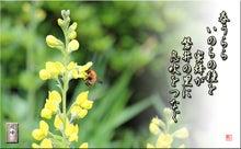 フォト短歌Amebaブログ-フォト短歌「命の種」