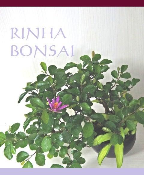 bonsai life      -盆栽のある暮らし- 東京の盆栽教室 琳葉(りんは)盆栽 RINHA BONSAI-スイレンボク モダン 琳葉盆栽