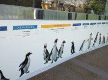 これだけでも株で稼げる!-京都水族館ペンギン壁