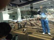 これだけでも株で稼げる!-京都水族館ペンギン集団
