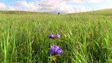 モンゴルで働くジャーナリストのblog-草原乗馬 乗馬モンゴル 二本木