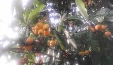 $すすきのBEATの営業雑感 -枇杷の木