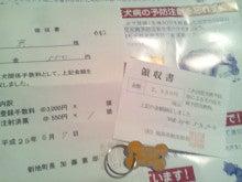 MISSY★LABRADOR RETRIEVER-鑑札