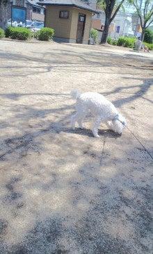 公園でお散歩する愛犬トト02