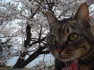 お出かけ猫 ミヨちゃん-3