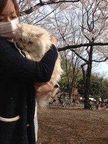 美猫ちゃんブログ-スコティッシュ・フォールド 画像