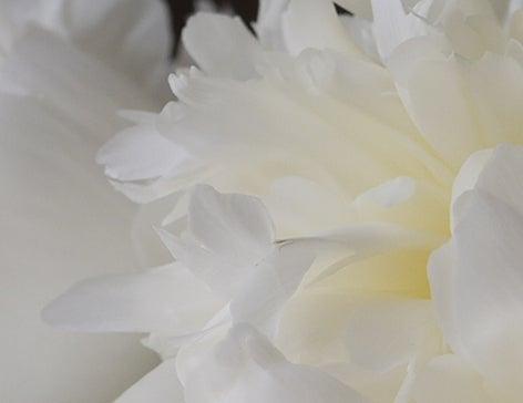 $日本のもの、こと  桃兎の部屋-芍薬