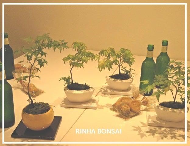 bonsai life      -盆栽のある暮らし- 東京の盆栽教室 琳葉(りんは)盆栽 RINHA BONSAI-琳葉盆栽教室