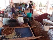 ここんとこの横砂園-ミャンマー アラビカ サンドライ