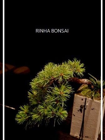 bonsai life      -盆栽のある暮らし- 東京の盆栽教室 琳葉(りんは)盆栽 RINHA BONSAI-琳葉盆栽 五葉松 モダン