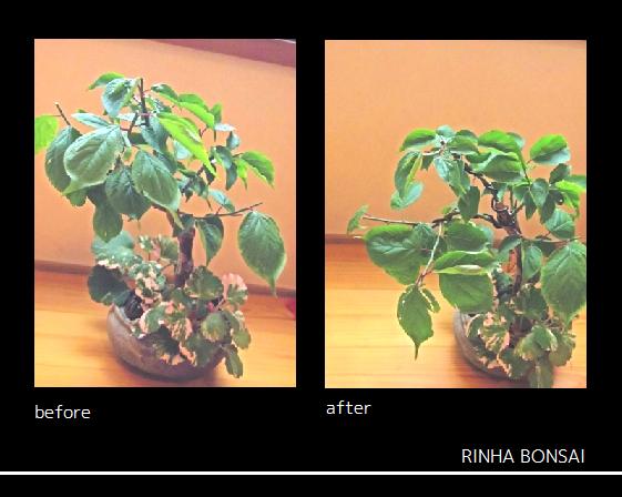 bonsai life      -盆栽のある暮らし- 東京の盆栽教室 琳葉(りんは)盆栽 RINHA BONSAI-琳葉盆栽 モダン 梅