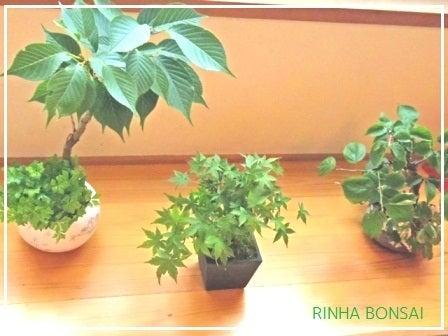 bonsai life      -盆栽のある暮らし- 東京の盆栽教室 琳葉(りんは)盆栽 RINHA BONSAI-琳葉盆栽 モダン お手入れ後