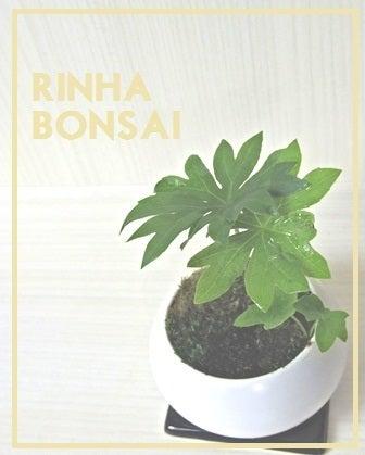 bonsai life      -盆栽のある暮らし- 東京の盆栽教室 琳葉(りんは)盆栽 RINHA BONSAI-琳葉盆栽 モダン ヤブレガサ