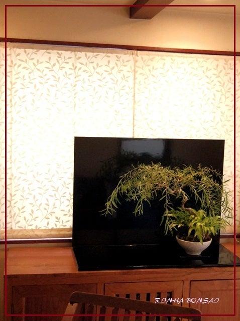 bonsai life      -盆栽のある暮らし- 東京の盆栽教室 琳葉(りんは)盆栽 RINHA BONSAI-琳葉盆栽 六角堂柳 モダン