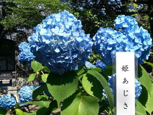 わん ニャン 仲良し姉妹-20130609_090421.jpg