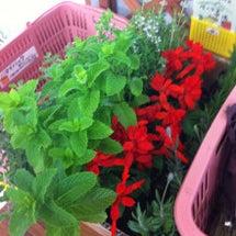 八ヶ岳の野菜とハーブ