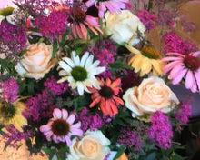 $花のイロハ-カラフルエチナセア