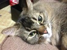 おやぢと風鈴の猫日記-image