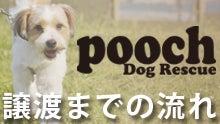 Pooch Dog Rescue-譲渡までの流れ