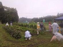 直売所「夢市場」の直営農場ブログ~いちファーマーの挑戦~-DCIM0675.jpg