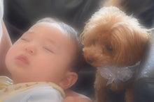 ティーカッププードル☆テディのブログ