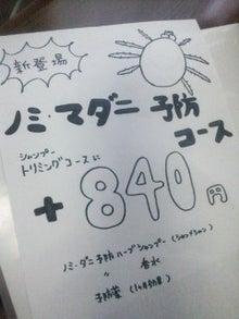 Poodock♪ownerのママトリ日記2-DSC_1129.JPG