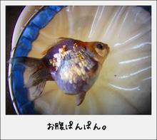 ===== あいあい金魚* =====
