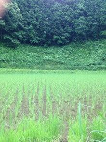 TPAのへや-緑が映える田んぼ