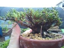 盆栽と宇宙