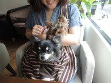 ☆DOGと一緒にOKカフェ☆ musashimaru cafe