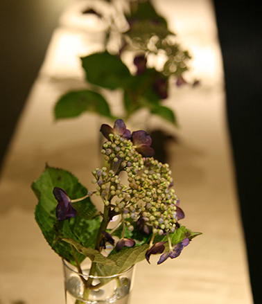 $日本のもの、こと  桃兎の部屋-額の花