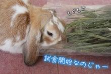 コロッケは食べれない-牧草p7