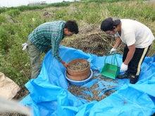 """自然栽培を伝え広める""""めぐみ農場""""ブログ"""
