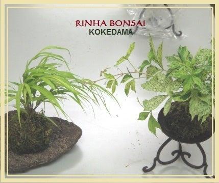 bonsai life      -盆栽のある暮らし- 東京の盆栽教室 琳葉(りんは)盆栽 RINHA BONSAI-琳葉盆栽 苔玉