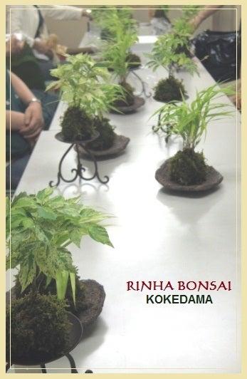 bonsai life      -盆栽のある暮らし- 東京の盆栽教室 琳葉(りんは)盆栽 RINHA BONSAI-琳葉盆栽 苔玉2