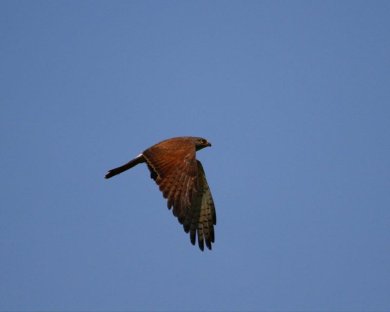野鳥ってかわいいね