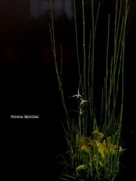 bonsai life      -盆栽のある暮らし- 東京の盆栽教室 琳葉(りんは)盆栽 RINHA BONSAI-トクサ 琳葉盆栽 モダン