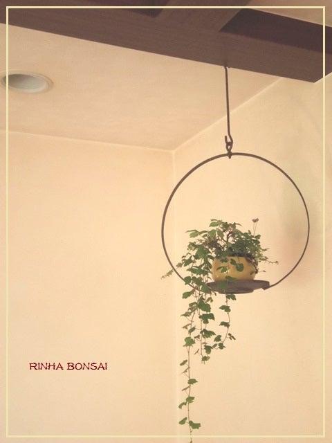 bonsai life      -盆栽のある暮らし- 東京の盆栽教室 琳葉(りんは)盆栽 RINHA BONSAI-ナツヅタ 琳葉盆栽 モダン