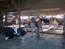 京町家を買って改修する男のblog-牛