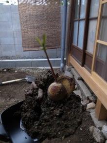 京町家を買って改修する男のblog-アボカド
