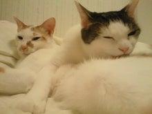 PFL★MIKIのブログ-2013062819210000.jpg