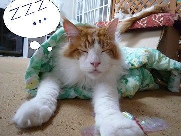 かりんとママ&1ぴょん&4猫ズ☆