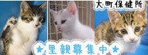 $ペットショップ チャイム-chime_banner