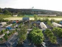 耕作放棄地を剣先スコップで畑に開拓!有機肥料を使い農薬無しで野菜を栽培する週2日の農作業記録 byウッチー-130701ウッチー式・今日の農作業の出来栄え02