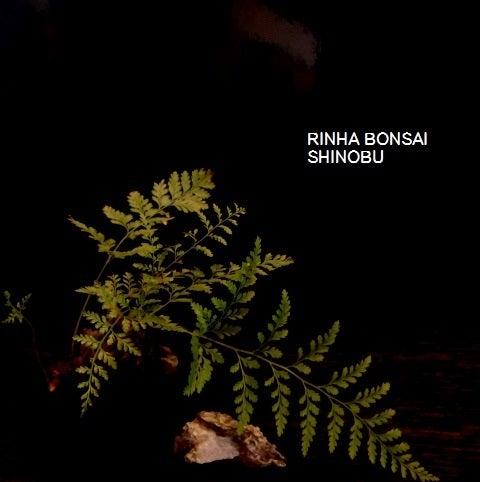 bonsai life      -盆栽のある暮らし- 東京の盆栽教室 琳葉(りんは)盆栽 RINHA BONSAI-セイヨウシノブ 西洋シノブ 琳葉盆栽