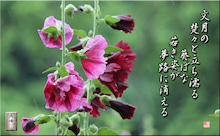 フォト短歌Amebaブログ-フォト短歌「葵ばな」