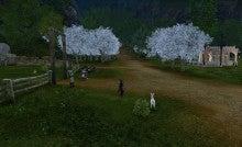 桜並木再び