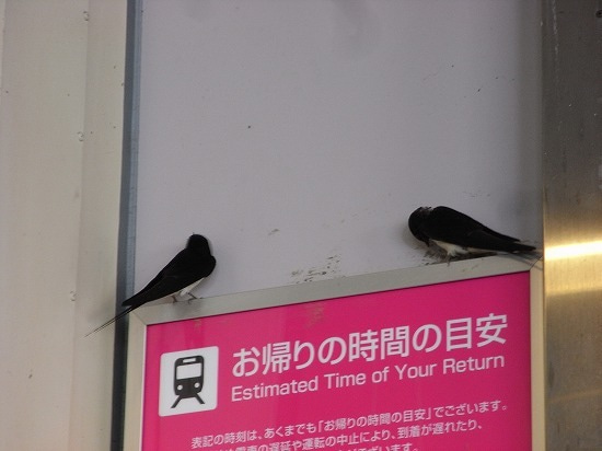 スーパーB級コレクション伝説-takao2013062714