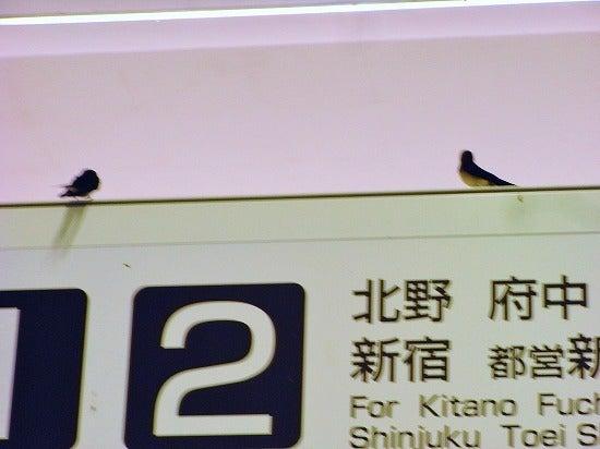 スーパーB級コレクション伝説-takao2013062716