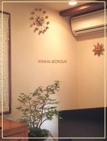 bonsai life      -盆栽のある暮らし- 東京の盆栽教室 琳葉(りんは)盆栽 RINHA BONSAI-琳葉盆栽 雑木林 寄せ植え